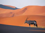 Original Oryx Avatar